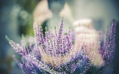 kleiner Pflanzenratgeber für dein Zuhause