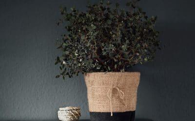 DIY Jute Blumentopf – Einfach und Günstig